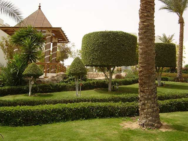 Hotel Royal Grand Sharm - ogród