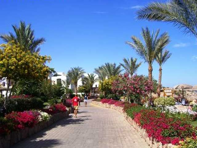 Royal Grand Sharm - tereny zielone w hotelu