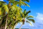 Dominikana - karaibska plaża to prawdziwy raj
