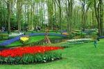 Ogrody Keukenhof - Holandia