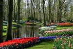 Ogrody Keukenhof w Holandii