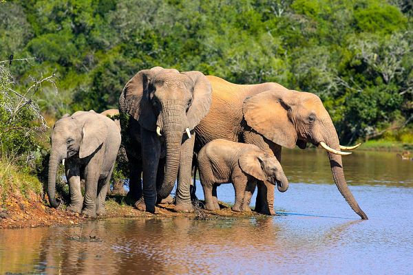 Afrykański Express i Wodospady Wiktorii
