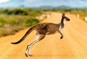 Australia, Nowa Zelandia - Od A do Z