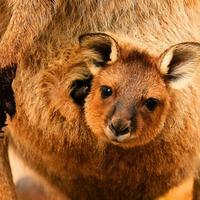 Australia - Nowa Zelandia (wyspy Północna i Południowa)