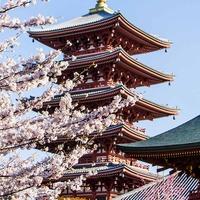 Japonia - w krainie gejsz i samurajów