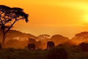 Kenia Classic