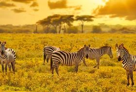 Kenia i Tanzania - W poszukiwaniu źródeł Nilu