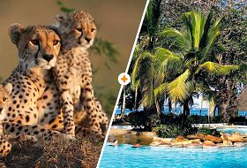 Kenijskie Trio + Papillon Lagoon Reef