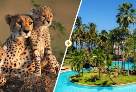 Kenijskie Trio + Serena Beach Resort & SPA