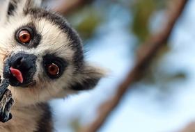 Madagaskar- Natura Lemura
