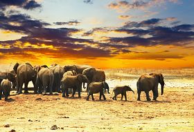 Namibia- Pomarańczowe Wydmy