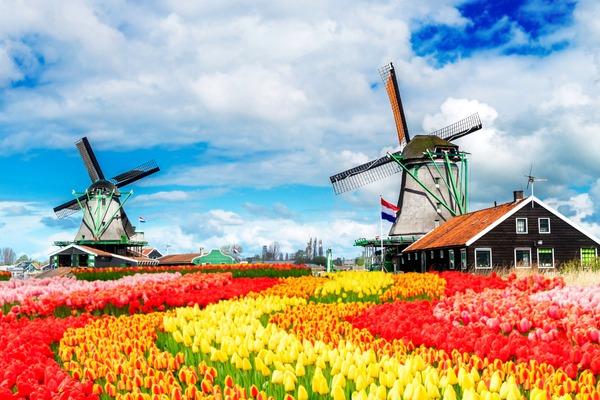 Parada Kwiatów w Holandii 7 dni