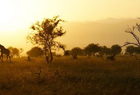Safari -  Kenia, Tanzania, Zanzibar