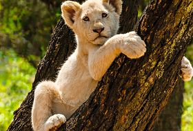 Safari z Wielka Piatka