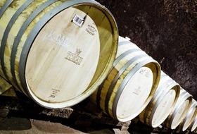 Śladem węgierskiego wina