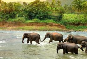 Sri Lanka - Esencja Cejlonu de lux