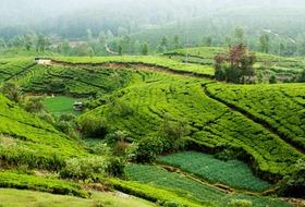 Sri Lanka- Smak herbaty z cynamonem