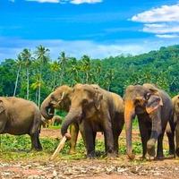 Tajemnice Sri Lanki i Malediwy