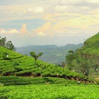 Tajemnice Sri Lanki - zakwaterowanie 3*