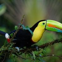 W krainie dzikiej Orchidei - zwiedzanie Kostaryki
